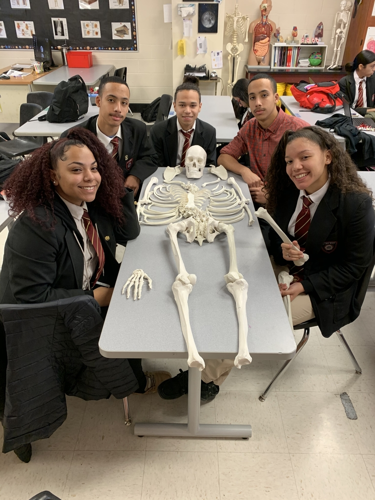 Anatomy students identify bones while building a human skeleton